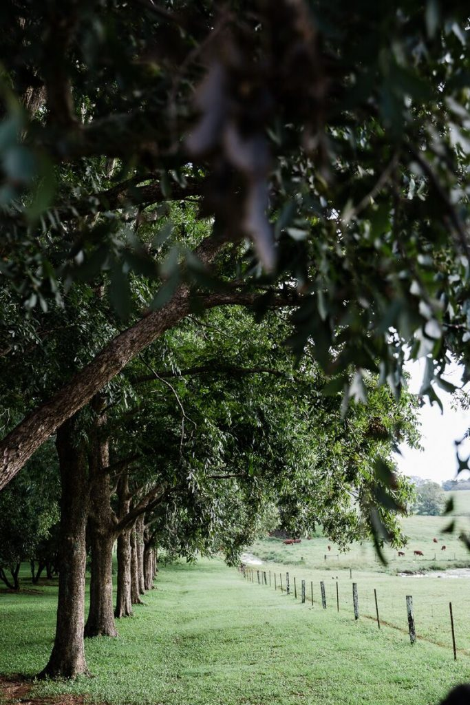 Macca Orchard Looking in_preview