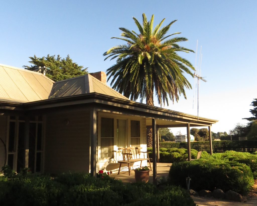 House verandah palm_Kyneton (2)
