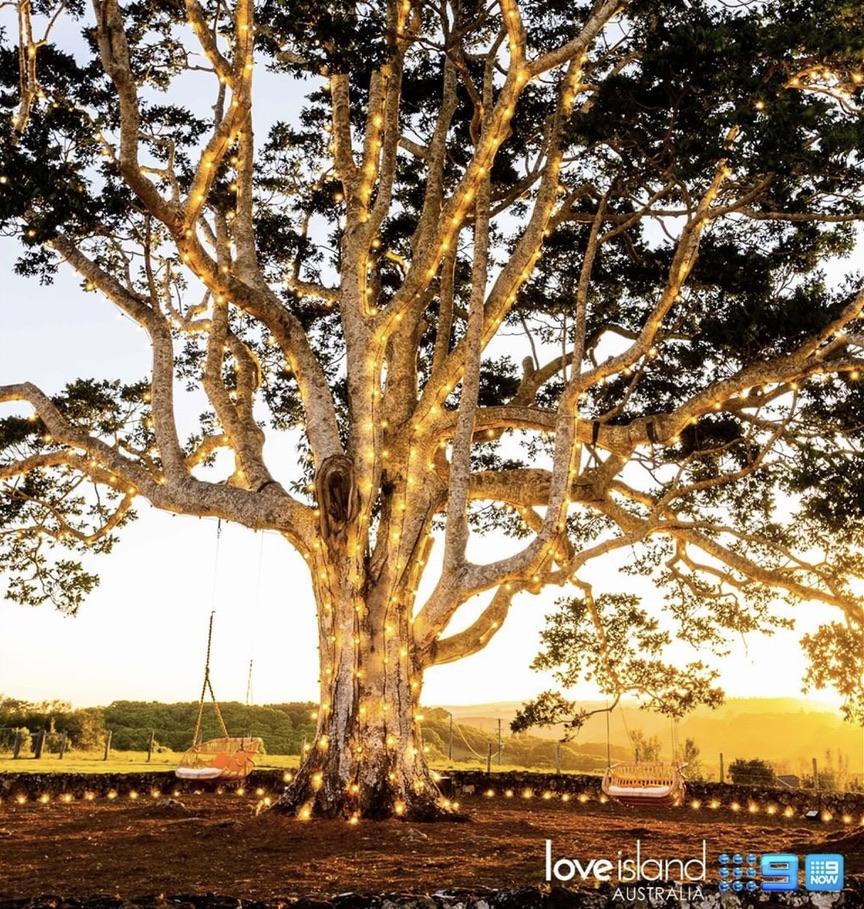 love island australia tree swing